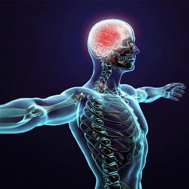 Những điều thú vị chứng minh cơ thể con người là cỗ máy hoàn hảo nhất thumbnail