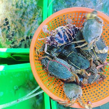 """Điểm danh các khu chợ bán hải sản rẻ nhất Vũng Tàu, vừa tươi ngon vừa không lo bị """"chặt chém"""" thumbnail"""