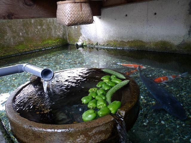 Ngôi làng có kênh rạch sạch đến mức người dân lấy nước nấu cơm