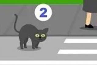 Ai cần giúp đỡ nhất? Nếu chọn giúp con mèo bạn là người khá nhạy cảm
