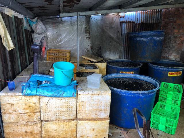 TP.HCM: Phát hiện 2,2 tấn ốc ngâm hóa chất sắp tuồn ra thị trường