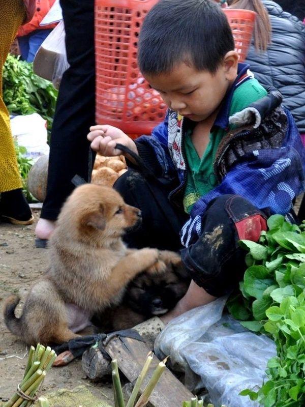 Xót cậu bé nghèo vùng cao bán chó lấy tiền mua rau gạo ăn qua ngày