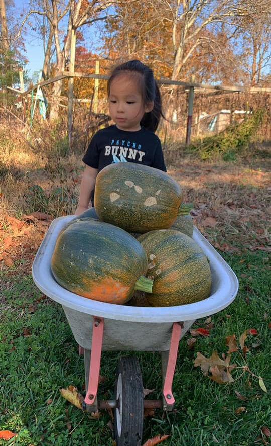 Sang Mỹ, mẹ Việt vẫn giỏi làm vườn: Rau trái trĩu quả căng mọng